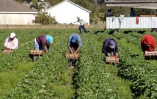 lavoratori della filiera agroalimentare